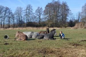 Dětské tábory s koňmi