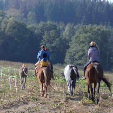 Víkendové akce s koňmi