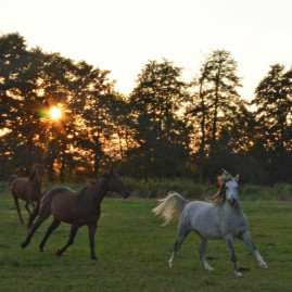 Weidepflatzunterkunft für Pferde