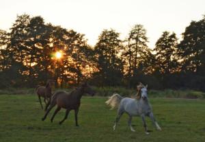 Pastevní ustájení a chov koní