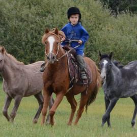 Kinder-Sommercamps mit Pferden