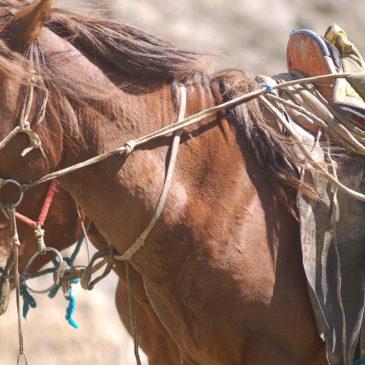 Koně (i osli), které jsme potkali na cestách